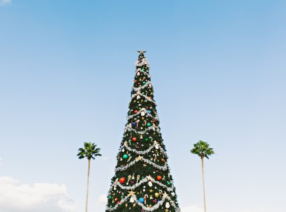Christmas tree among palm trees